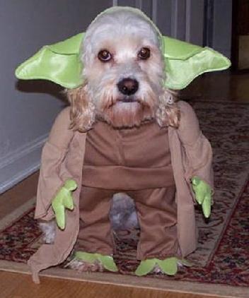 halloween-yoda-dog.jpg